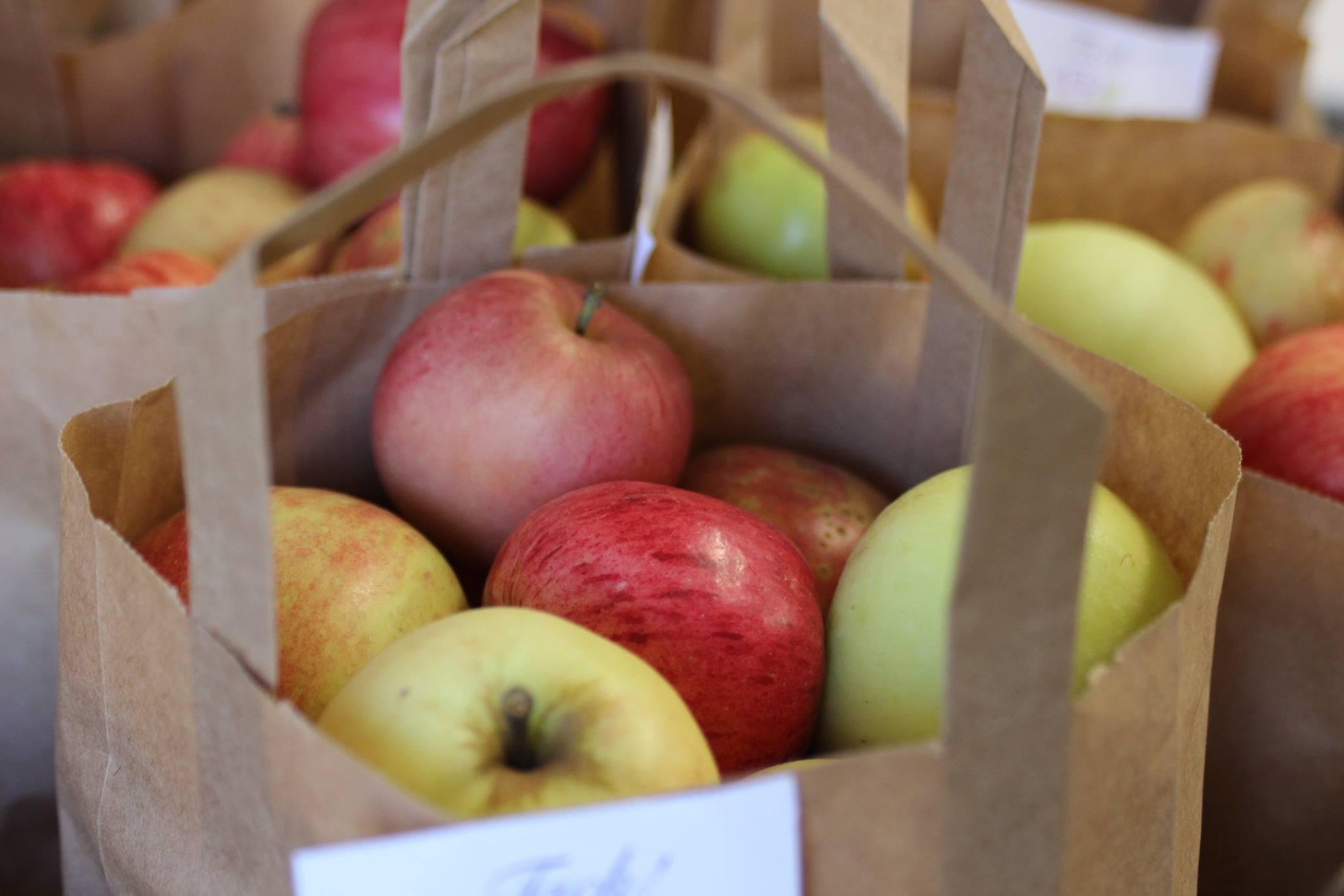 Äpplen REKO-ring självplock Alekärr