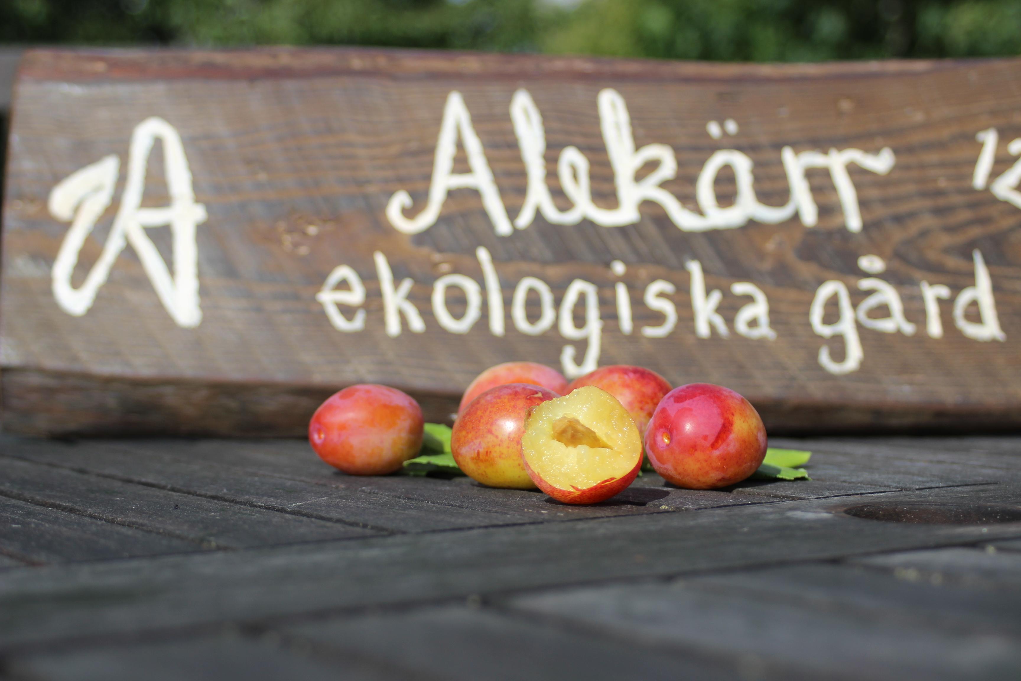 Opal plommon Alekärr